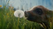 Coop Naturaplan: Mit Franky auf den Bauernhof